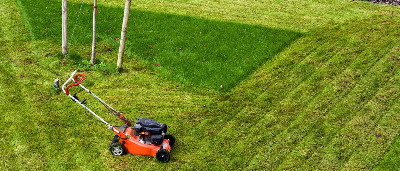4 Tips to Upscale your Lawn & Landscaping Service | ReachOutSuite